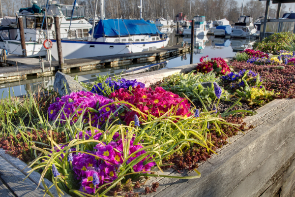 Delta stock photo. Flower boxes in front of a marina.